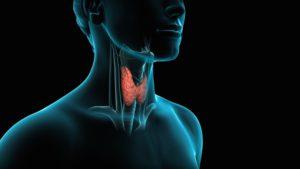 thyroid-300x169